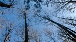 February Skyscape