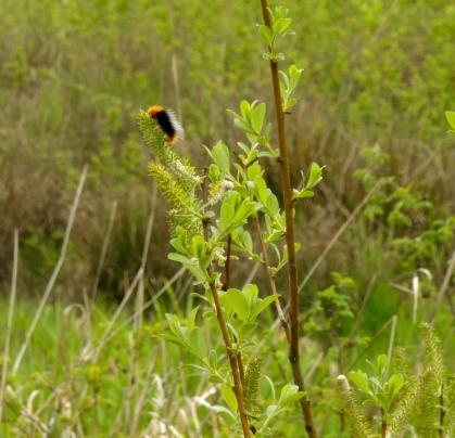 Jackson Frazier wetlands in April