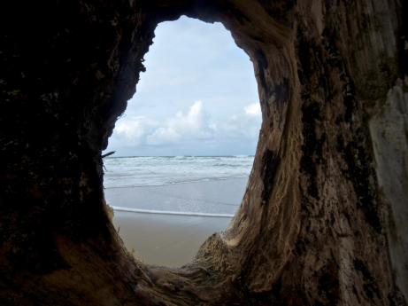 view of the ocean via driftwood